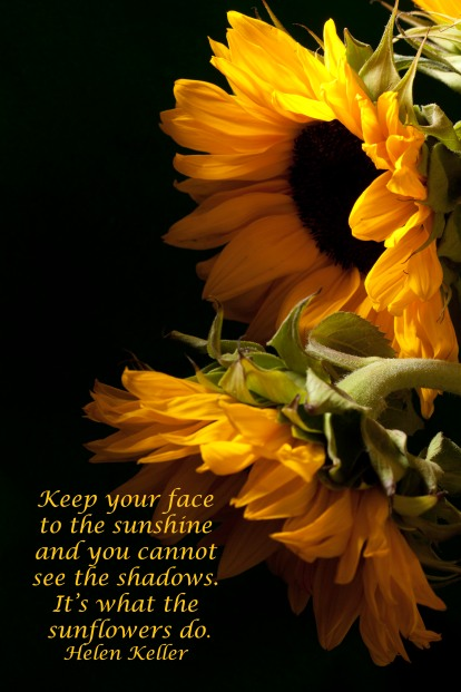 2 Sunflowers with quote