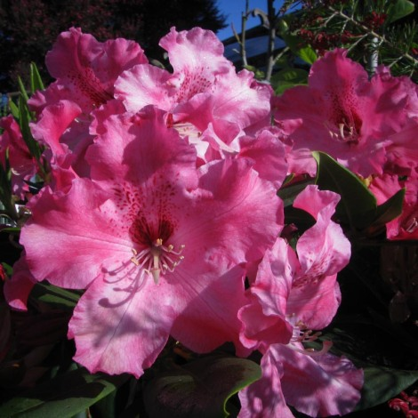 Red rhodies (1 of 1)-2