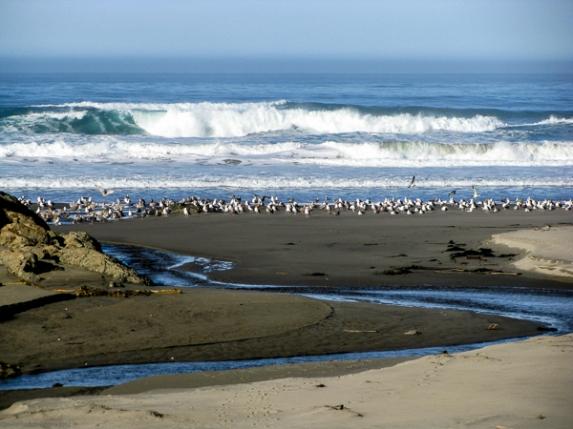 Ocean Scene5