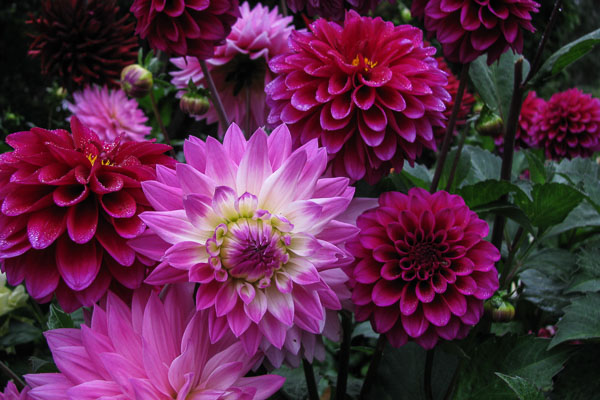 Flowers always make people better, happier and more helpful; they are the sunshine, food and medicine for the soul. Luther Burbank